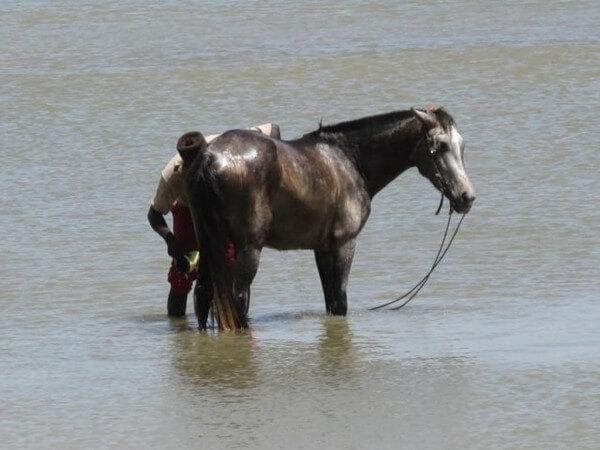 Grande toilette du cheval