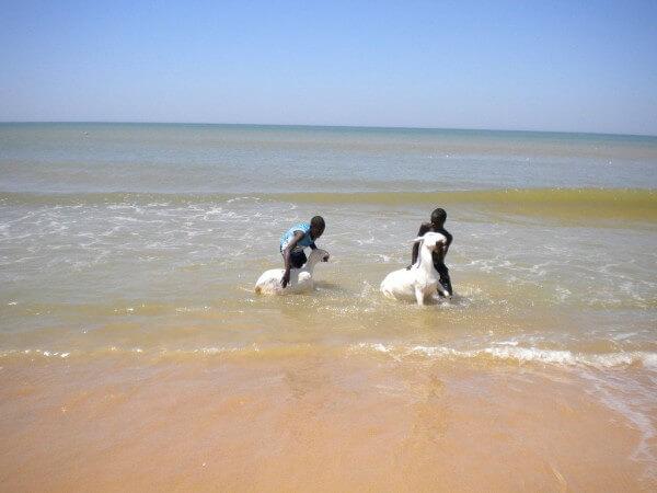 à la plage somone